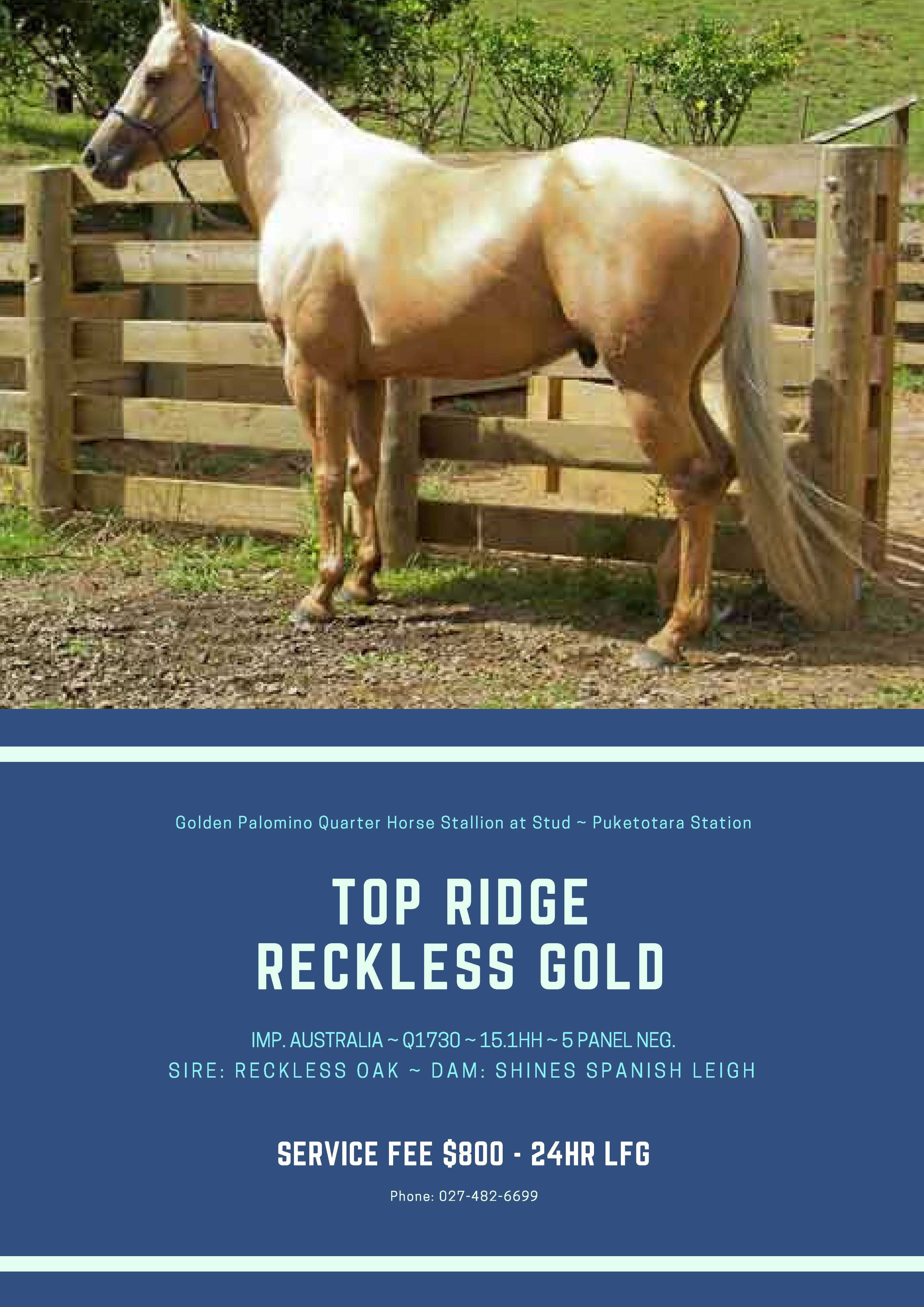 Top Ridge Reckless Gold - Reckless 2018 Poster